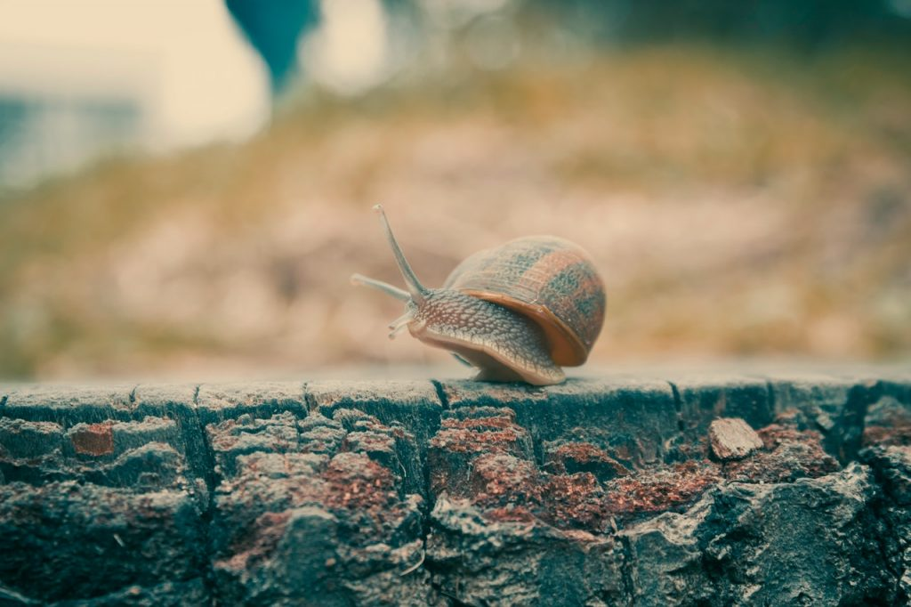 Travelling as fast as a snail: an example of a more sustainable tourism